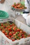 Bakje van rijpe aardbeien Royalty-vrije Stock Afbeeldingen