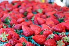 Bakjes van aardbeien Royalty-vrije Stock Foto