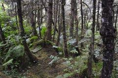 bakkant skogsbevuxet Arkivbild