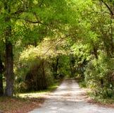 bakkant skogsbevuxet Royaltyfria Bilder