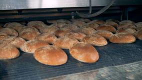 Bakkerijvoedsel bij een fabriek Het speciale materiaal bespuit broodjes bij een bakkerijinstallatie stock video