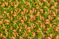 Baklawa. Sweet baklawa in the market, Israel Royalty Free Stock Images