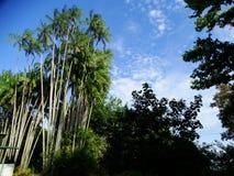 Bako国家公园 沙捞越 自治市镇 马来西亚 图库摄影