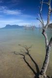 Bako Nationaal Park, Borneo Royalty-vrije Stock Foto's