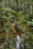 Bako National Park. Trail in the rainforest, Bako National Park, Sarawak, Malaysia Stock Image