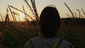 Bakre sikt av den unga mannen som går till och med ett havrefält under soluppgång lager videofilmer