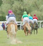 Bakre sikt av fyra tävlings- ponys Arkivbilder
