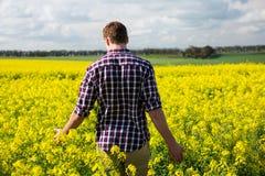 Bakre sikt av mannen som går i senapsgult fält Arkivbilder