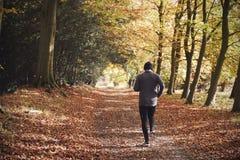 Bakre sikt av mogen manspring till och med Autumn Woodland royaltyfri foto