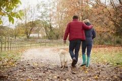 Bakre sikt av mogna par på Autumn Walk With Labrador royaltyfri foto