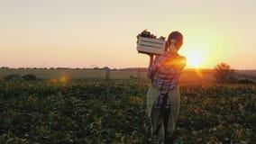 Bakre sikt: En kvinnlig bonde med en ask av nya grönsaker promenerar hennes fält Sunt äta och nya grönsaker arkivbilder