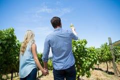 Bakre sikt för låg vinkel av den hållande vinglaset för par på vingården royaltyfri foto