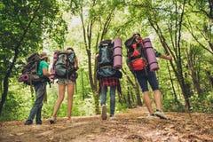 Bakre sikt för låg vinkel av fyra turister som går i höstskog, fotografering för bildbyråer