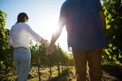 Bakre sikt för låg vinkel av parinnehavhänder på vingården arkivbild