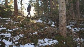 Bakre tillbaka sikt av den unga turisten som går på bergpinjeskog med solljus på bakgrund Oigenkännligt fotvandra för man arkivfilmer