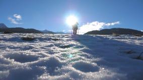 Bakre tillbaka sikt av gående nordiskt gå för ung fotvandrare med pinnar på snöig fält Oigenkännlig grabb som trekking på snö lager videofilmer