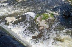 Baksida för gödsvin` s parkerar och vattenfall 15 Arkivfoton