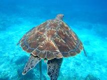 Baksida för ` s för havssköldpadda, Thailand hav Arkivfoton