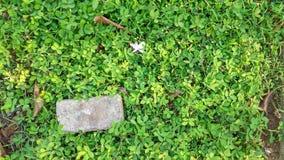 Baksteen bij groen gras stock afbeeldingen