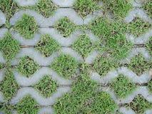 Baksteen en grasvloer van tuin of park, decoratie in het park Stock Foto
