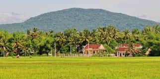 Baksteenhuizen met padieveld in Quy nhon, Vietnam Stock Afbeeldingen