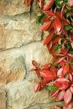 Bakstenen en de lentebladeren Royalty-vrije Stock Afbeeldingen
