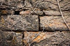 Bakstenen en Wijnstokken Stock Foto