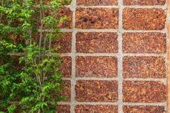 Bakstenen muur en groen blad royalty-vrije stock foto's