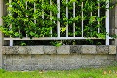 Bakstenen muur en groen blad royalty-vrije stock afbeelding