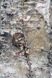 Bakstenen muur met lagen van doorstane gipspleister Royalty-vrije Stock Foto's