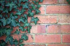 Bakstenen muur met wijnstok Royalty-vrije Stock Foto's