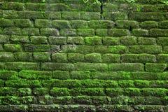 Bakstenen muurtextuur en achtergrond die door mos wordt behandeld stock afbeeldingen