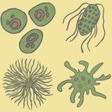 bakterie ustawiać Wektorowa bakteria vis Fotografia Royalty Free