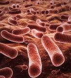 bakteriedjupfält royaltyfri foto