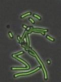 bakteriemikroskop under royaltyfria foton