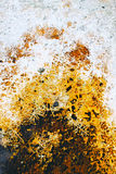 Bakterien-Matte Stockbild