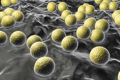Bakterien-Mikrokokke luteus lizenzfreie abbildung