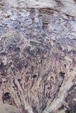 Bakterien-Strom von Yellowstone Nationalpark Lizenzfreies Stockbild