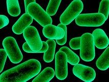 bakterier Fotografering för Bildbyråer