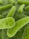 bakterier 3d Arkivfoto