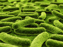 bakterier royaltyfri illustrationer