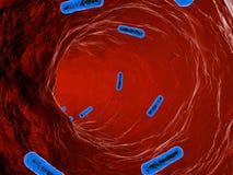 Bakterier på en organisk yttersida Royaltyfri Illustrationer