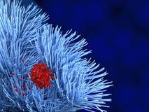 Bakterier på luftstrupeceller Royaltyfria Bilder