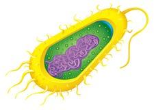 Bakterii komórka Fotografia Stock