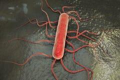 Bakterii Listeria monocytogenes royalty ilustracja