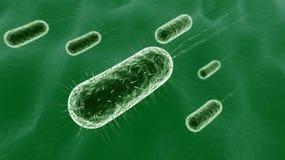 bakterium Lizenzfreies Stockbild