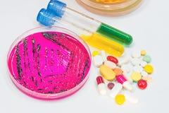 Bakteryjny koloni kultury przyrost, biochem i antybiotyk, Obraz Royalty Free