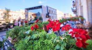 Baku, Azerbaijan, Center street. Royalty Free Stock Photo