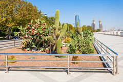 Baku boulevard, Caspian sea. Cactus at Baku boulevard at the Caspian Sea embankment. Baku is the capital and largest city of Azerbaijan stock images
