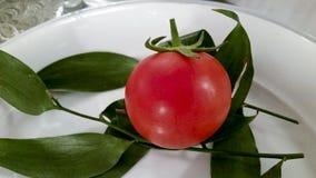 Baku-Tomate Stockbild